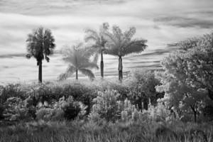 David Piemonte Dreamscapes 4 Palm Trees