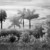 David Piemonte Dreamscapes 4 Palm Trees thumbnail