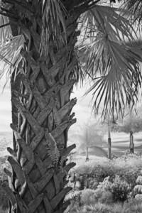 David Piemonte Palm Tree Bark enhanced