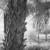 David Piemonte Palm Tree Bark enhanced thumbnail