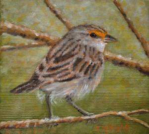 Wright.J. sparrow
