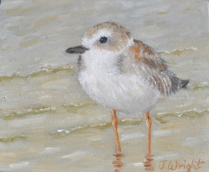 wright.j. plover 2